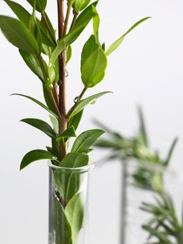 plant-testtube